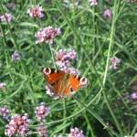giardinaggio biologico - link - giardino naturale