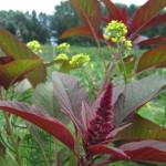 giardinaggio biologico - link - orto giardino