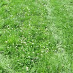 giardinaggio biologico - link - prato alternativo